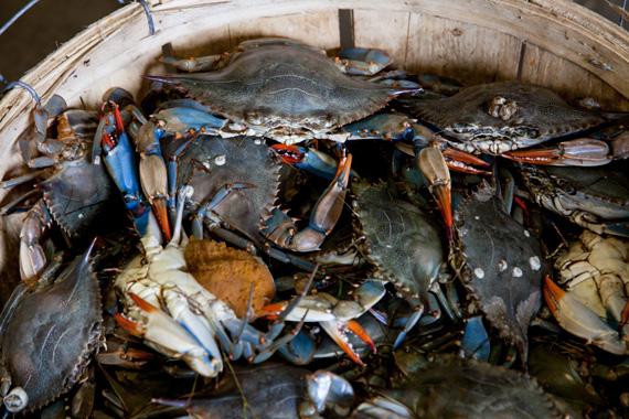 Fishing-Blue-Crab